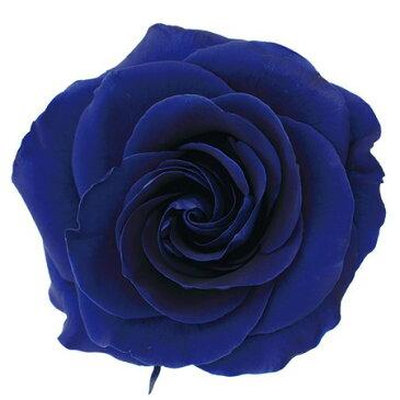 【プリザーブド】ヴェルディッシモ/ヴィクトリアローズ ロイヤルブルー 2輪/箱/55-418【01】【取寄】《 プリザーブドフラワー プリザーブドフラワー花材 バラ(ローズ) 》