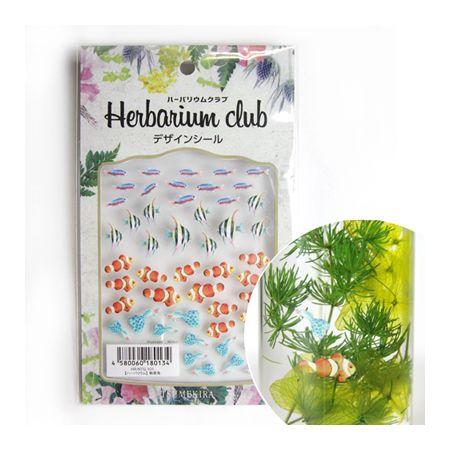 即日 ハーバリウムクラブ/熱帯魚/HR-NTG-101