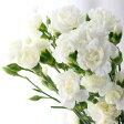 【生花】SPカーネ[白]::コロンビア産[10本]