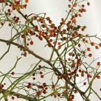 【生花】野バラ(実つき枝もの)親和会 1M程度【OT】※[5本]