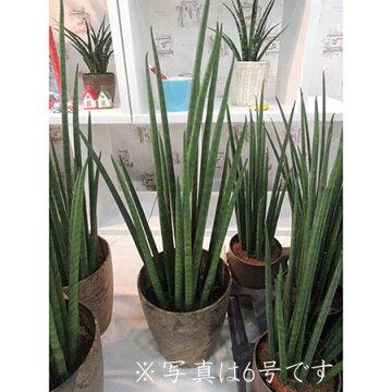【送料無料】【生花/予約F10】観葉植物