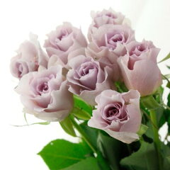 【生花 切り花 切花 バラ ローズ 薔薇 ブライダル フォルム】◆レビューを書いてポイント2倍!...
