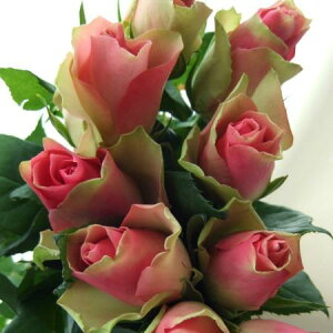 【生花 切り花 切花 バラ ローズ 薔薇 ブライダル ケニアローズ バラ ばら】◆レビューを書いて...