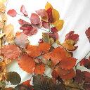 ドライフラワー 花束 ベル フルール ジョリー ピンク Belles Fleurs Jolie PINK セット ブーケ スワッグ 壁飾り