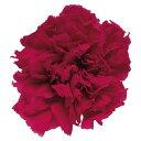 【プリザーブド】フロールエバー/ミニカーネーション 12輪 ホットピンク/FL1200-08【01】【取寄】《 プリザーブドフラワー プリザーブドフラワー花材 カーネーション 》