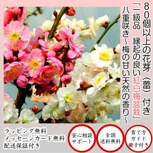 八重咲き インテリア