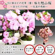 八重咲き ブランド フラワー