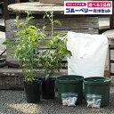◆送料無料◆ ブルーベリー 苗木 【2品種選べる 簡単! 丈夫に育てる ブルーベリー 栽培セット】  ...