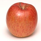 ◆SALE価格 10%OFF◆ リンゴ 【陸奥(むつ)】 1年生 接木 ポット苗 林檎 苗 果樹 果樹苗