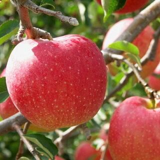 世界一りんご