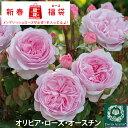 ◆バラ 福袋◆ イングリッシュローズ【オリビア ローズ オー...