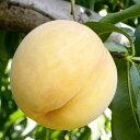 ◆送料無料◆ 桃 苗木 【黄金桃 (おうごんとう)】 1年生 接ぎ木 ポット苗 黄桃 もも 苗 果樹