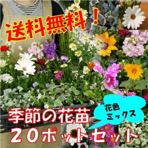 【送料無料】季節の花苗 花色ミックス20ポットセット★ただいま2苗増量の22ポットにてお届け!+肥料のプレゼント付【同梱難しい場合あります】★花壇・寄せ植えに旬の花を
