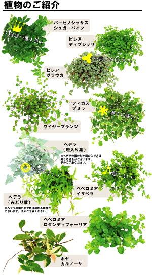 ☆●st【観葉】アクアテラポットツートンブリキアースカラーズ10.5全10種