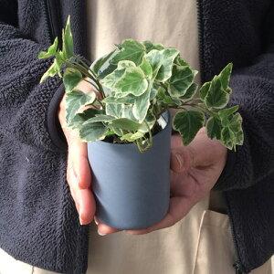 インテリアグリーンアクアテラポットツートンブリキアースカラーズ10.5全10種ギフト底面給水観葉植物シュガーバインアイビーヘデラペペロミアワイヤープランツ