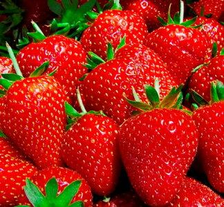 イチゴ苗大きい実になる品種3号ポット苗アイベリー・あかねっ娘・紅ほっぺ・もういっこ・おおきみ・ふさのか家庭菜園ガーデニングベランダ菜園果物苺いちご