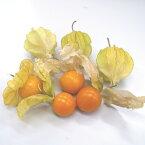 【●ST】【野菜苗】食用ホウズキ(ほおずき)瀬戸ゴールド3号ポット自根苗