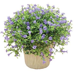 [PW]トレニア(夏すみれ)カタリーナブルーリバー花苗寄せ植えメイン