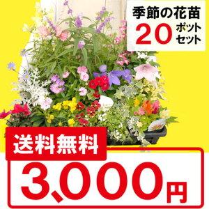 【送料無料】季節の花苗花色ミックス20ポットセット