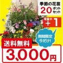 【送料無料】季節の花苗花色ミックス20ポットセット今だけ!pw苗1ポットプレゼント