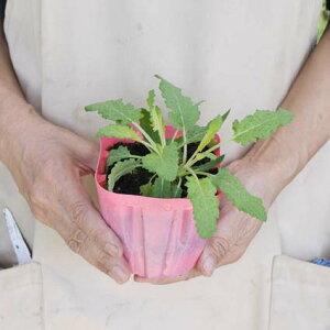 【送料無料】宿根草おまかせ20ポットセット花苗寄せ植え苗見本