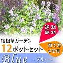 【送料無料】花苗 さわやかなブルーガーデンセット 宿根草12種、12ポットセット (安心の育て方メモ付き) お勧め花苗 イングリッシュガーデン