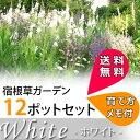 【L】可憐なホワイトガーデンセット宿根草12種、12ポットセット(安心の育て方メモ付き)【送料無料】