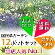 【L】【送料無料】【お得なセット】宿根草おまかせ12種12ポットセット(育て方メモ)