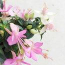 花苗フクシアラブリー3.5号ポット花色ピンクガーデニング寄せ植え花壇可愛い珍しいホクシャホクシアフクシャ