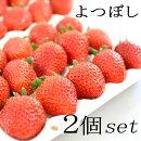 イチゴ苗【2個セット】イチゴよつぼし3号ポット家庭菜園ガーデニング果樹いちご苺