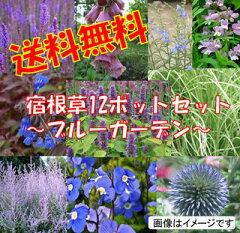 【セット】NO-6さわやかなブルーガーデンセット宿根草12種、12ポットセット(安心の育て方メモ...