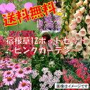 【セット】NO-4温かみあふれるピンクガーデンセット宿根草12種、12ポットセット(安心の育て方メモ付き)【送料無料!お買い得宿根草セット!】