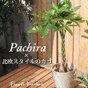 観葉植物 パキラ の鉢植え7号鉢 北欧スタイル【イケア】【I...