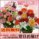 即日発送OK♪季節の花のアレンジ(アレンジメント)【父の日|誕生日|...