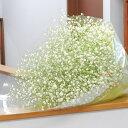 純白のカスミ草(かすみ草 霞草)の花束 Lサイズ 選べるラッ...