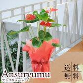 ギフト 花 アンスリュームの鉢花 お祝い ギフト アンスリウム 赤 レッド 花贈る 花宅配 送料無料