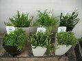 【サボテン類・リプサリス】3号鉢・6種類セット・多肉植物