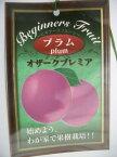 【プラム・オザークプレミア】(5号ポット)・果樹苗・フルーツ