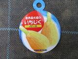 【イチジク苗・バナーネ】5号・(ロングドゥート)ヘルシー果樹