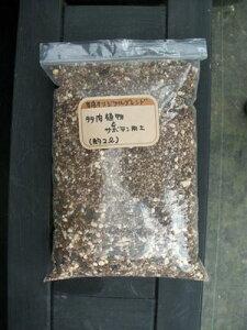 オリジナル サボテン 多肉植物 リットル