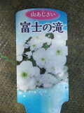 【可憐な山アジサイ・富士の滝】3号・落葉低木・庭木