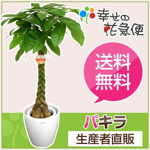 観葉植物 パキラ8号プラスチック鉢(鉢カバー付き) 高さ約1.1m【大型 開店祝い 新築祝い 誕生日プレ...