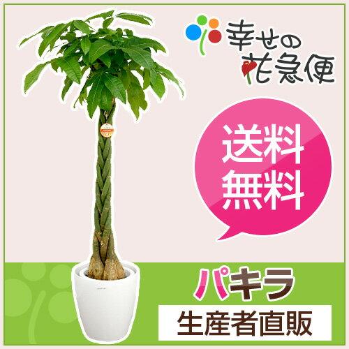 観葉植物 パキラ10号プラスチック鉢(鉢カバー付き) 高さ約1.5〜1.6m【大型 開店祝い 新築祝い 誕生...