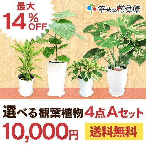 選べる観葉植物4点Aセット【開店祝い 新築...