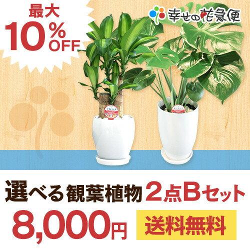 選べる観葉植物2点Bセット【開店祝い 新築祝い 誕生日プレ...