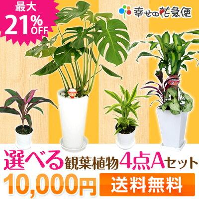 選べる観葉植物4点Aセット【送料無料】【観葉植物まとめ買い/新築祝い/開店祝い/誕生日/インテ…