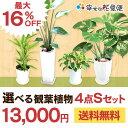 選べる観葉植物4点Sセット|【幸福の木・モンステラ・サンスベリア・ウン...