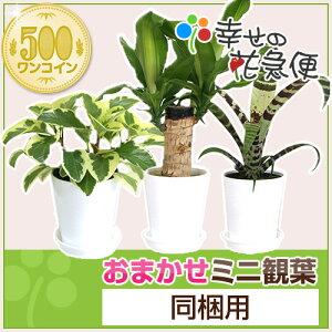 おまかせミニ観葉植物【同梱用】1鉢500円※鉢・土のみとの同梱不可