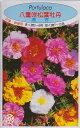 八重咲松葉牡丹 混合【種子】福花園種苗