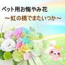 バルーン電報&花ギフト 花模様で買える「ペット用 お悔やみ花 レインボーカーネーション お供え アレンジメント 生花 送料無料 S1」の画像です。価格は4,180円になります。
